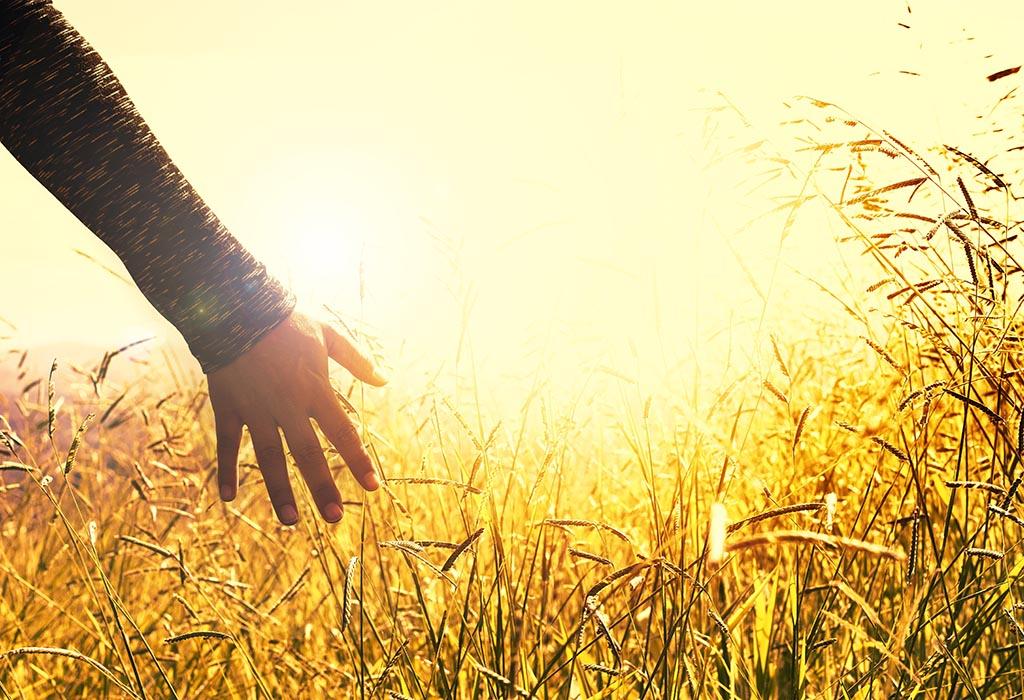 Eine offene Hand fährt durch die Ähren eines reifen Feldes, durch das die Sonne scheint. Fühlen statt Denken.